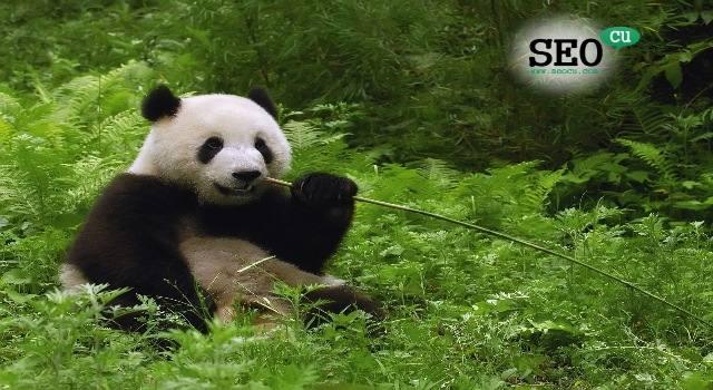 Google Güncellemesi Panda 4.2 Başladı!